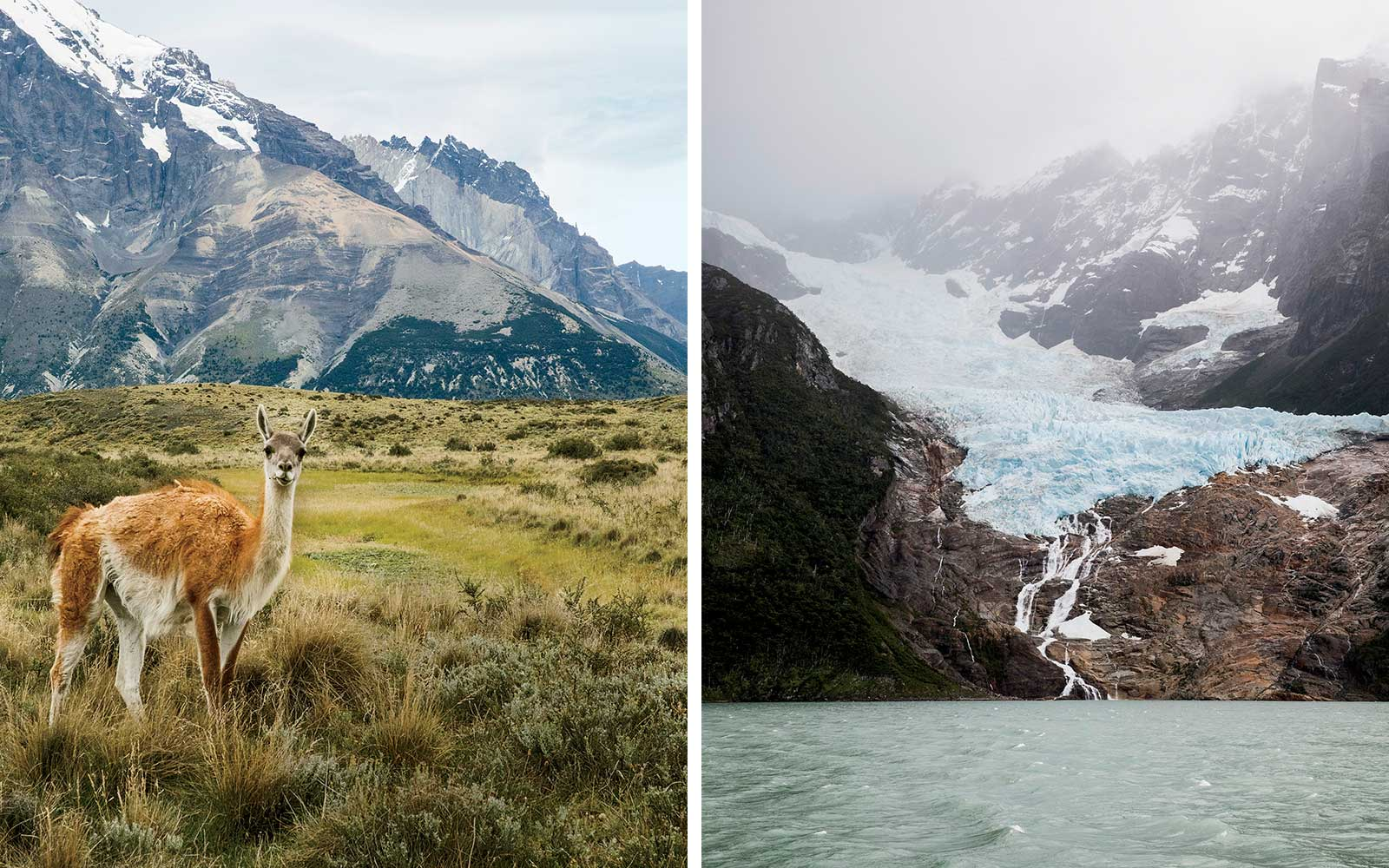 Glaciers and Guanacos in Patagonia