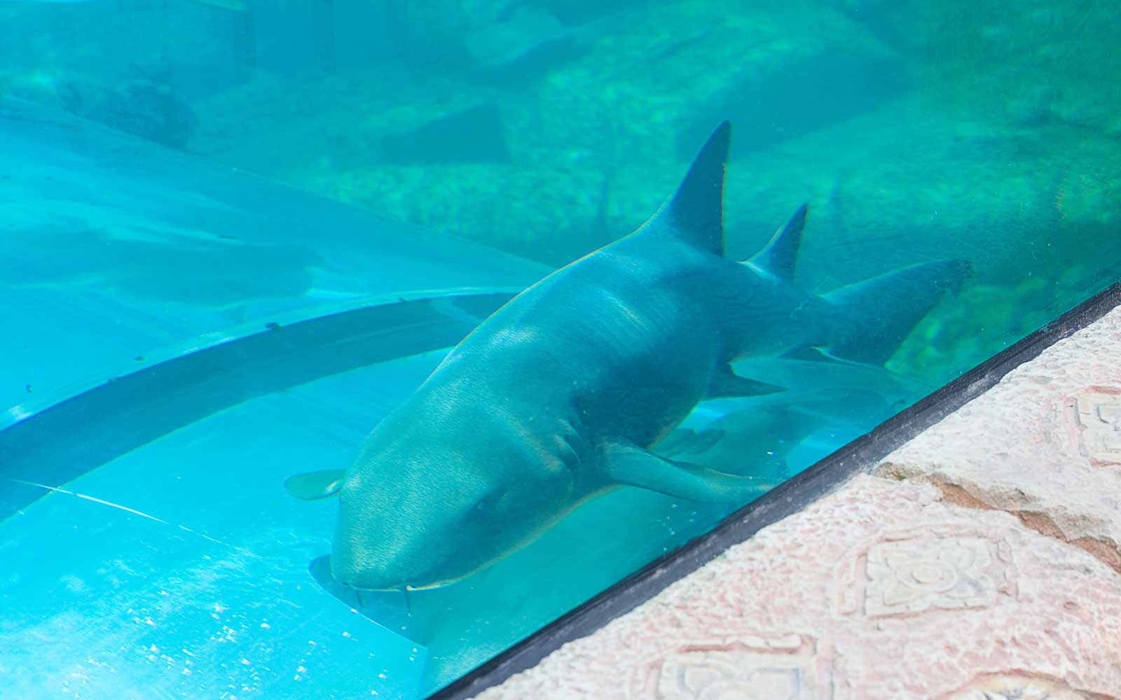 This Water Slide Goes Through a Shark Tank