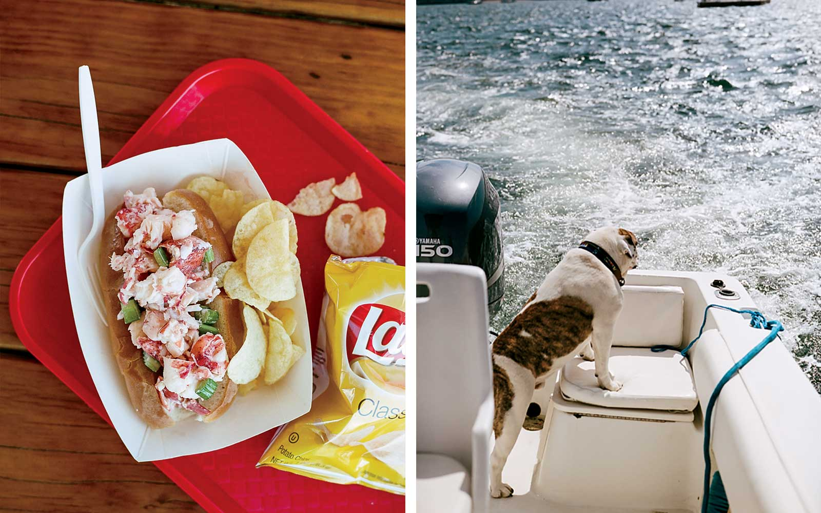Lobster roll in Newport, Rhode Island; a dog enjoying a boat ride