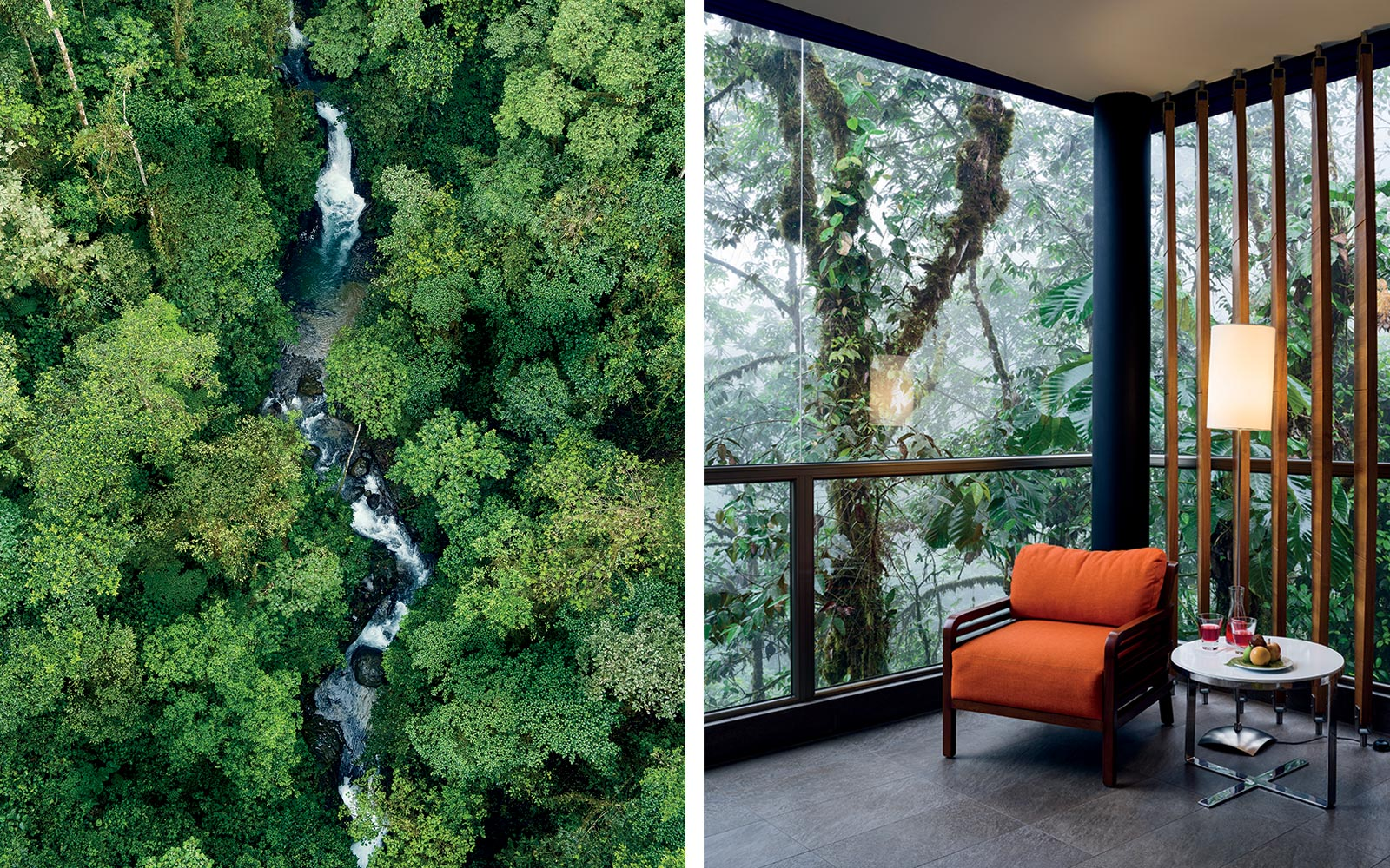 The rainforest, and a room, at Mashpi Lodge in Ecuador