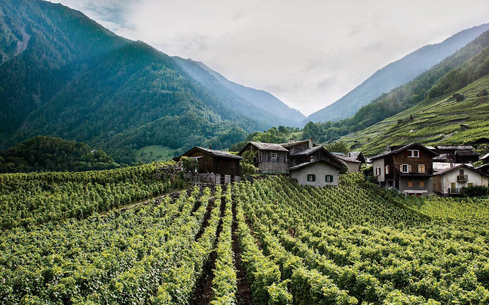 Vineyards in Le Perrey, Switzerland