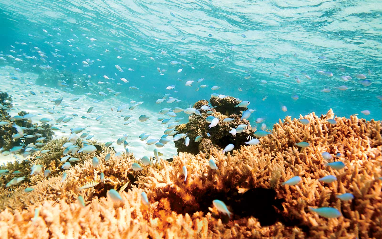 Reefs of the coast of Vatuvara resort in Fiji