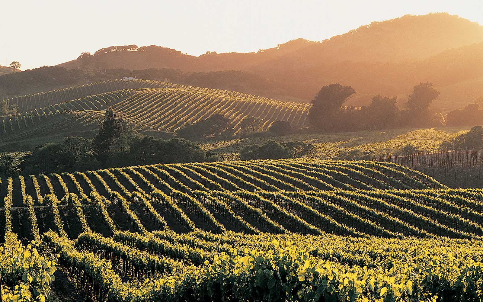 The Ultimate Napa Valley Tour: Eat and Drink With T+L's Editor in Chief As Your Guide
