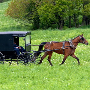 Buggy Riding in Amish Country