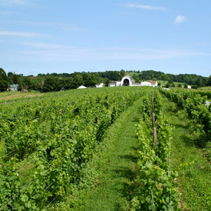 Art and Wine in Central Hudson Valley