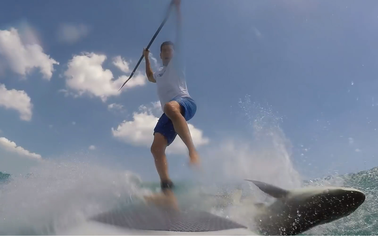 Shark Knocks Man Off His Paddleboard
