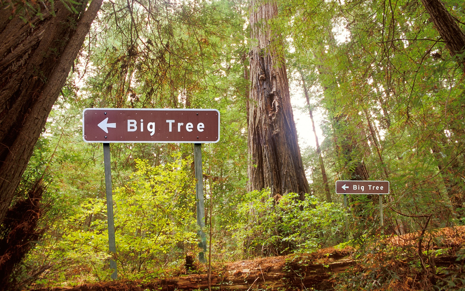 201209-w-funniest-signs-big-tree