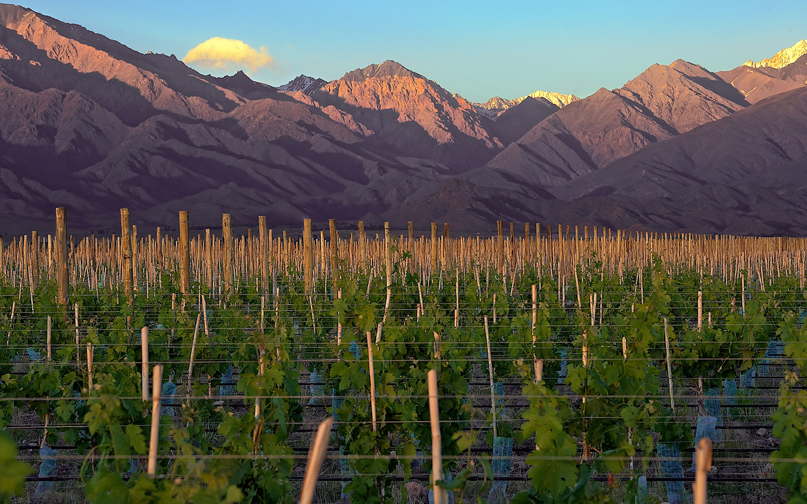 MENDOZA0415-winery