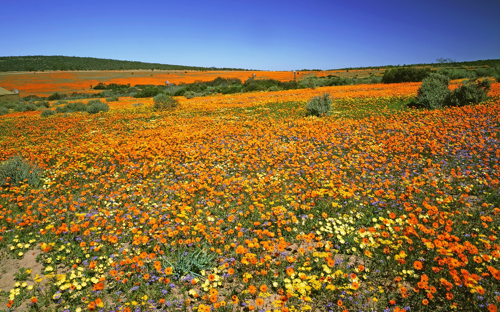 Cape Floral Kingdom, South Africa