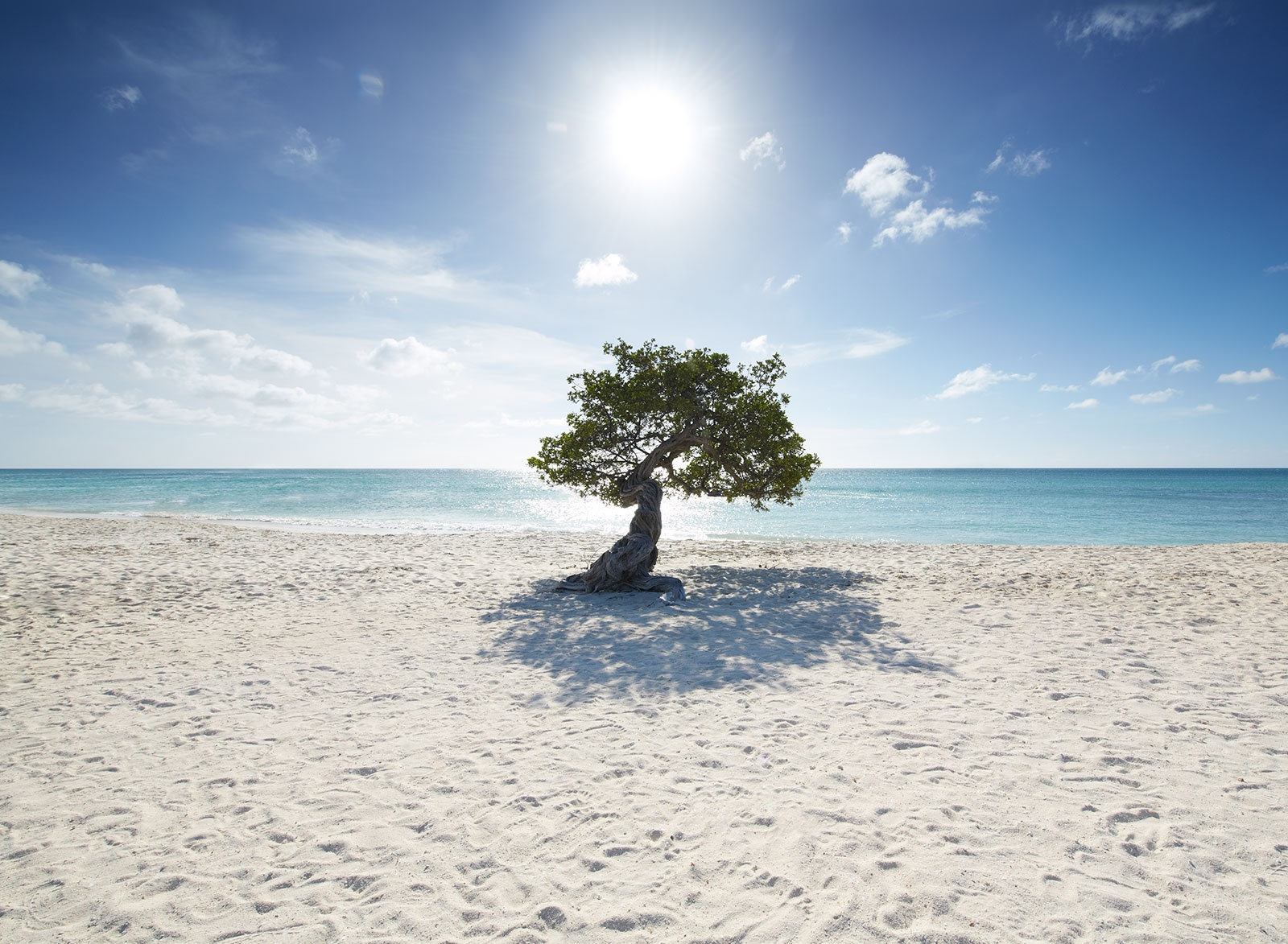 201503-connect-aruba-highres-2-trees
