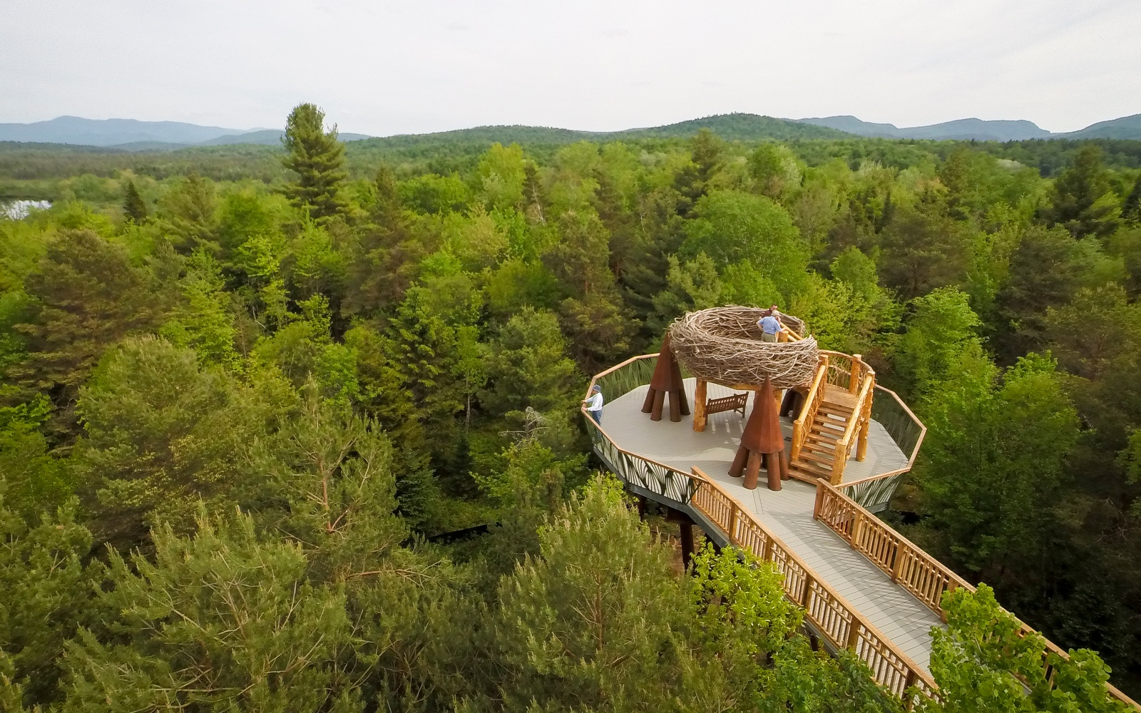 The High Line of the Forest Opens in the Adirondacks