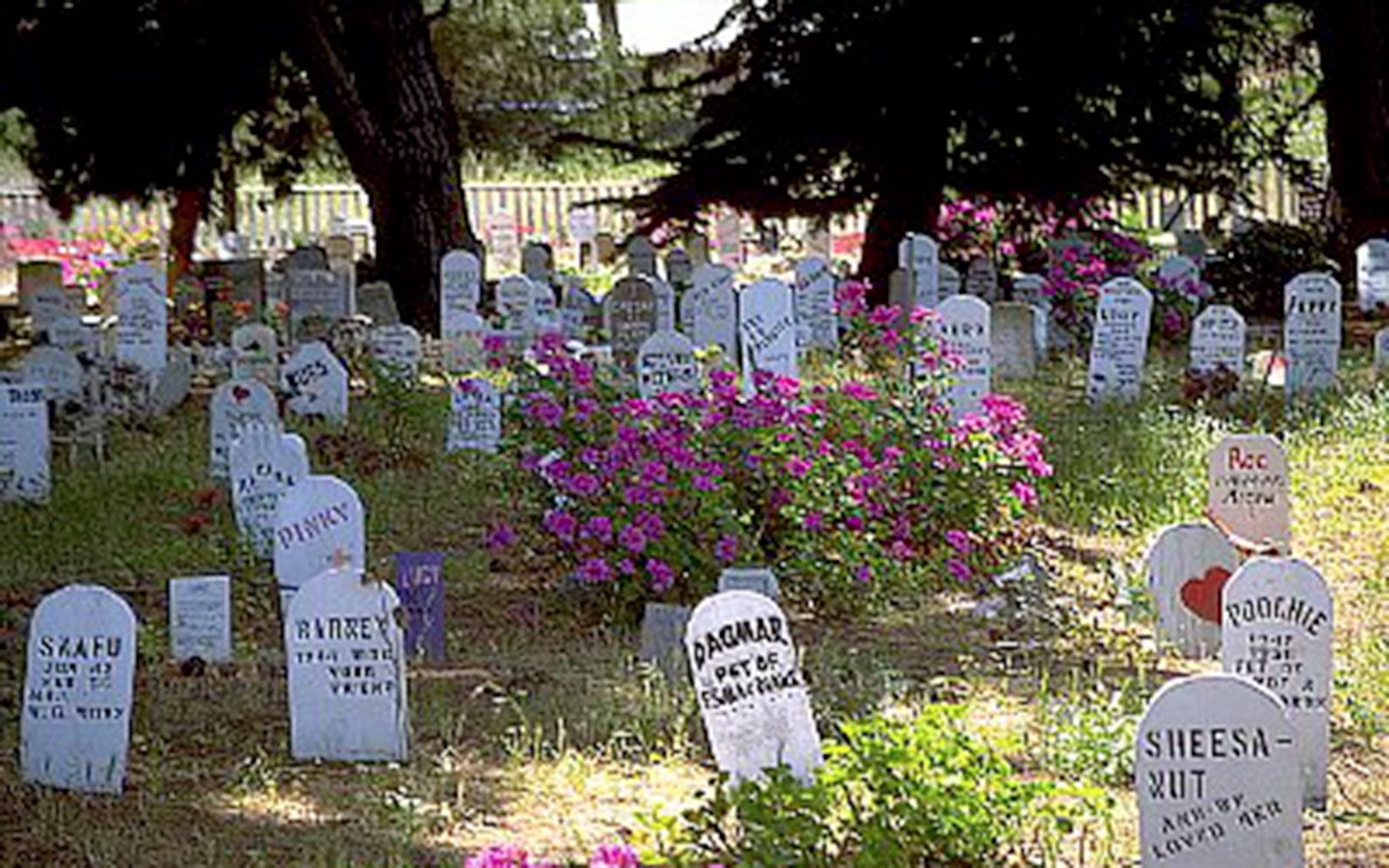 Presidio Pet Cemetery in San Francisco, California