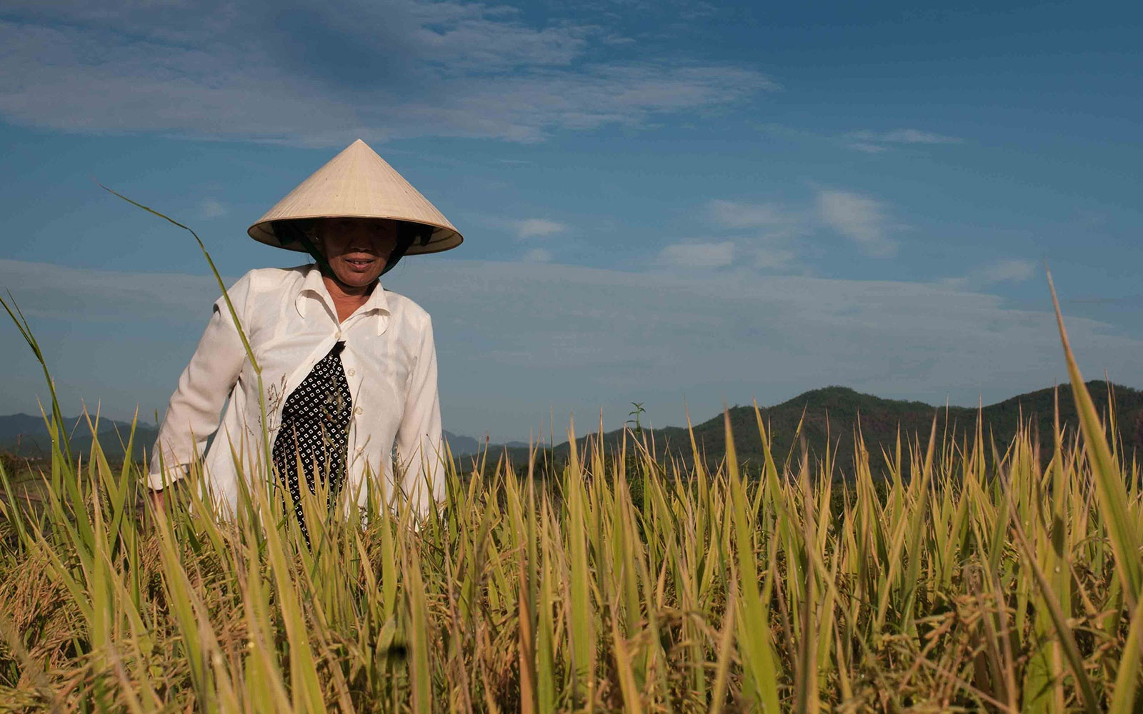 A rice farmer just outside Phong Nha