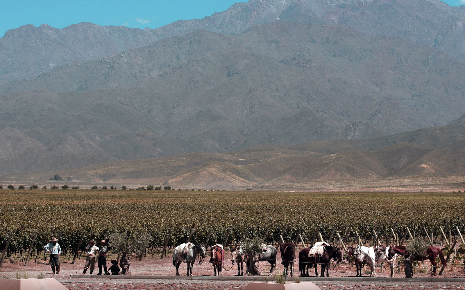 Winery Ride on Horseback in Mendoza, Argentina
