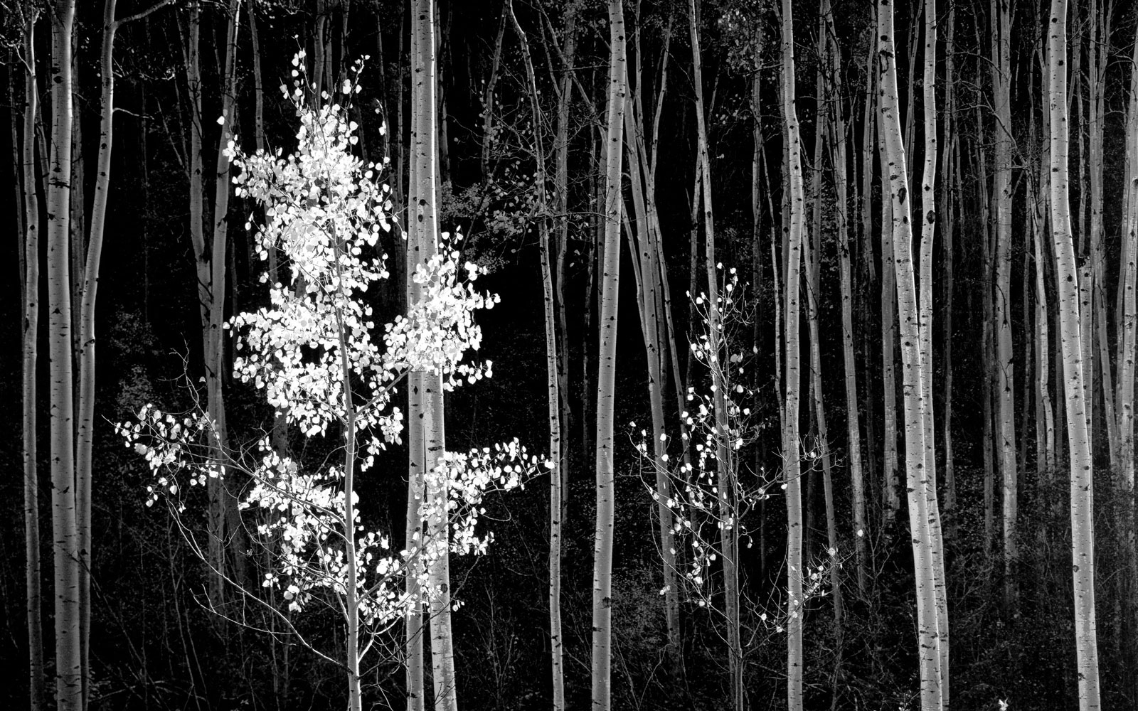 TRAVELEXHIBITIONS0815-ansel-adams