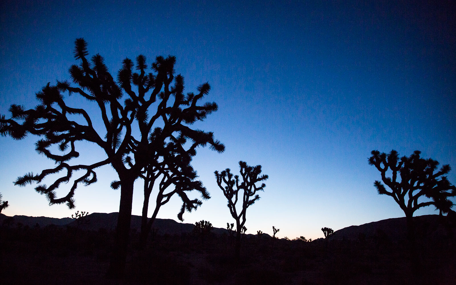 In Joshua Tree A Desert Blooms Travel Leisure