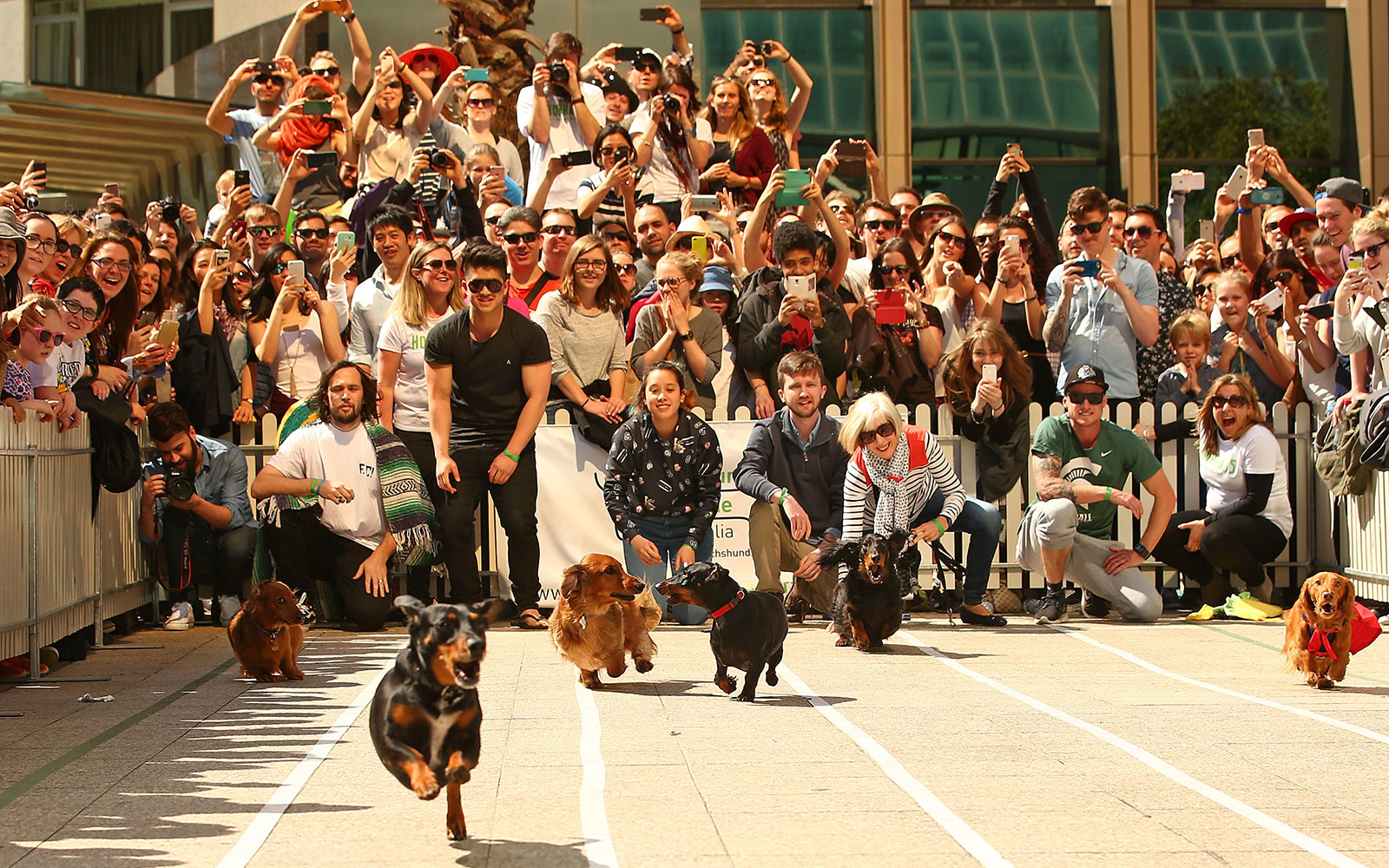 Wiener Dog Races (and Other Amazing Competitions)