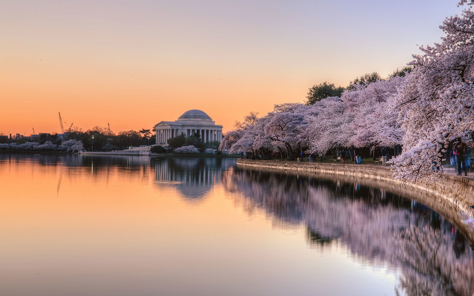 The Best Gardens in D.C., and When to Go