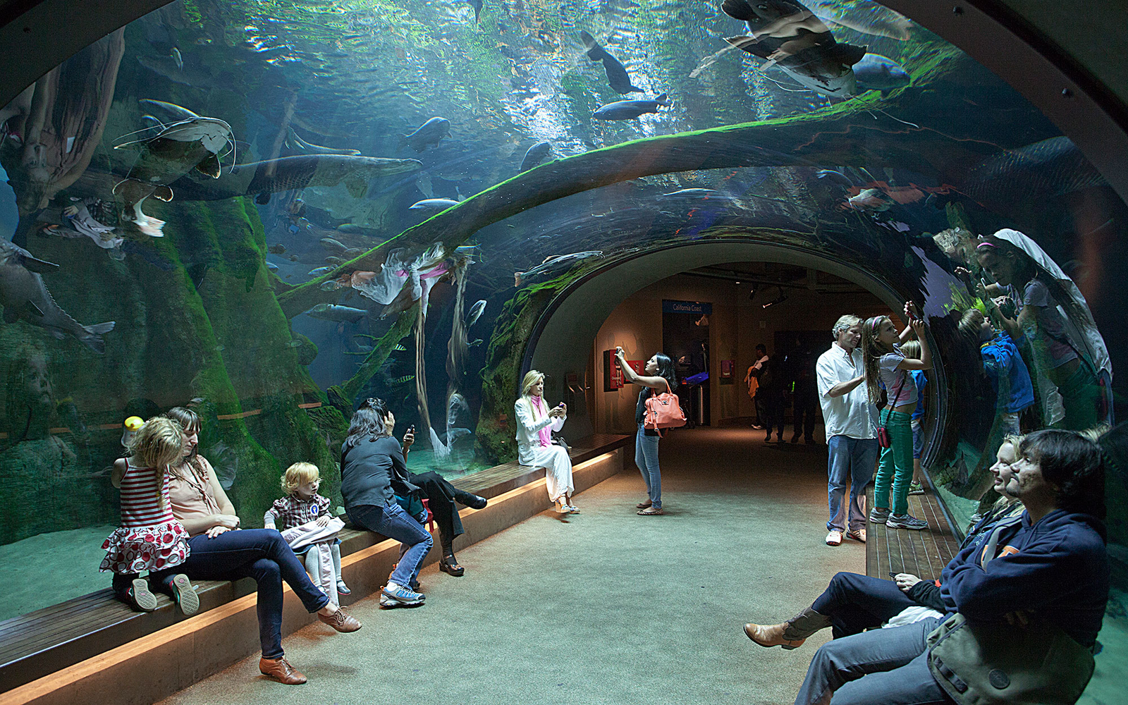 California Academy of Science | Travel + Leisure on