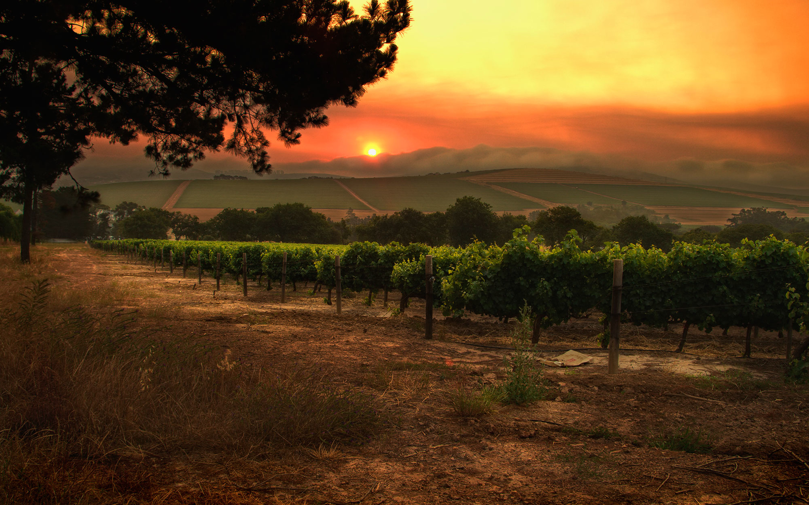What the wild fires mean for wine