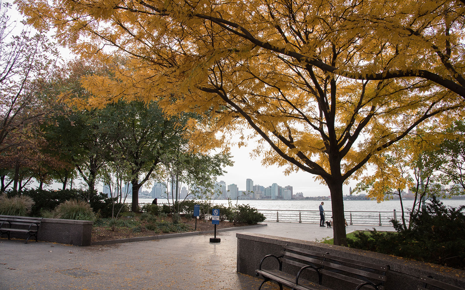 A Dog Walker S Guide To New York City S West Village