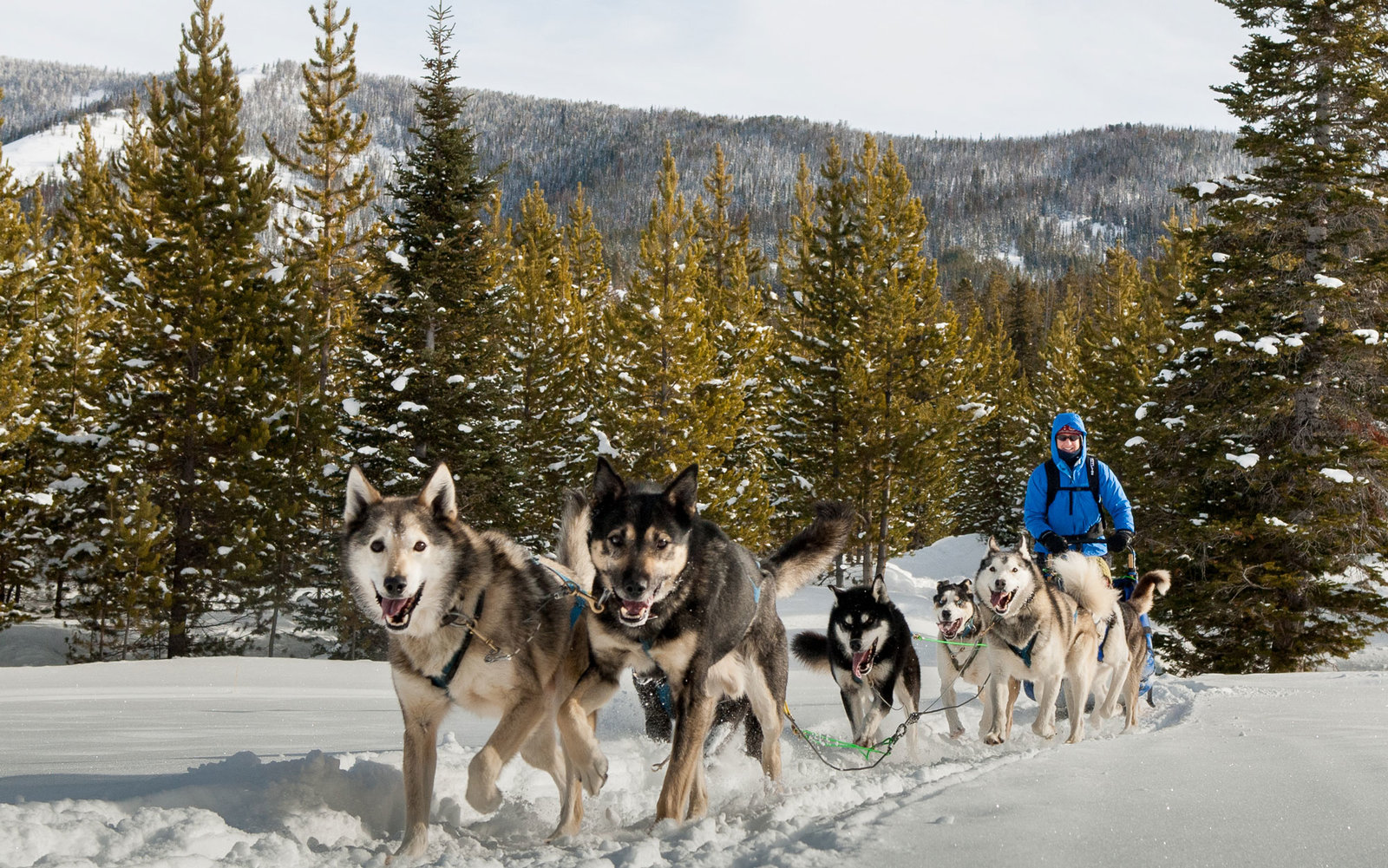 Big Sky Montana Dog Sledding