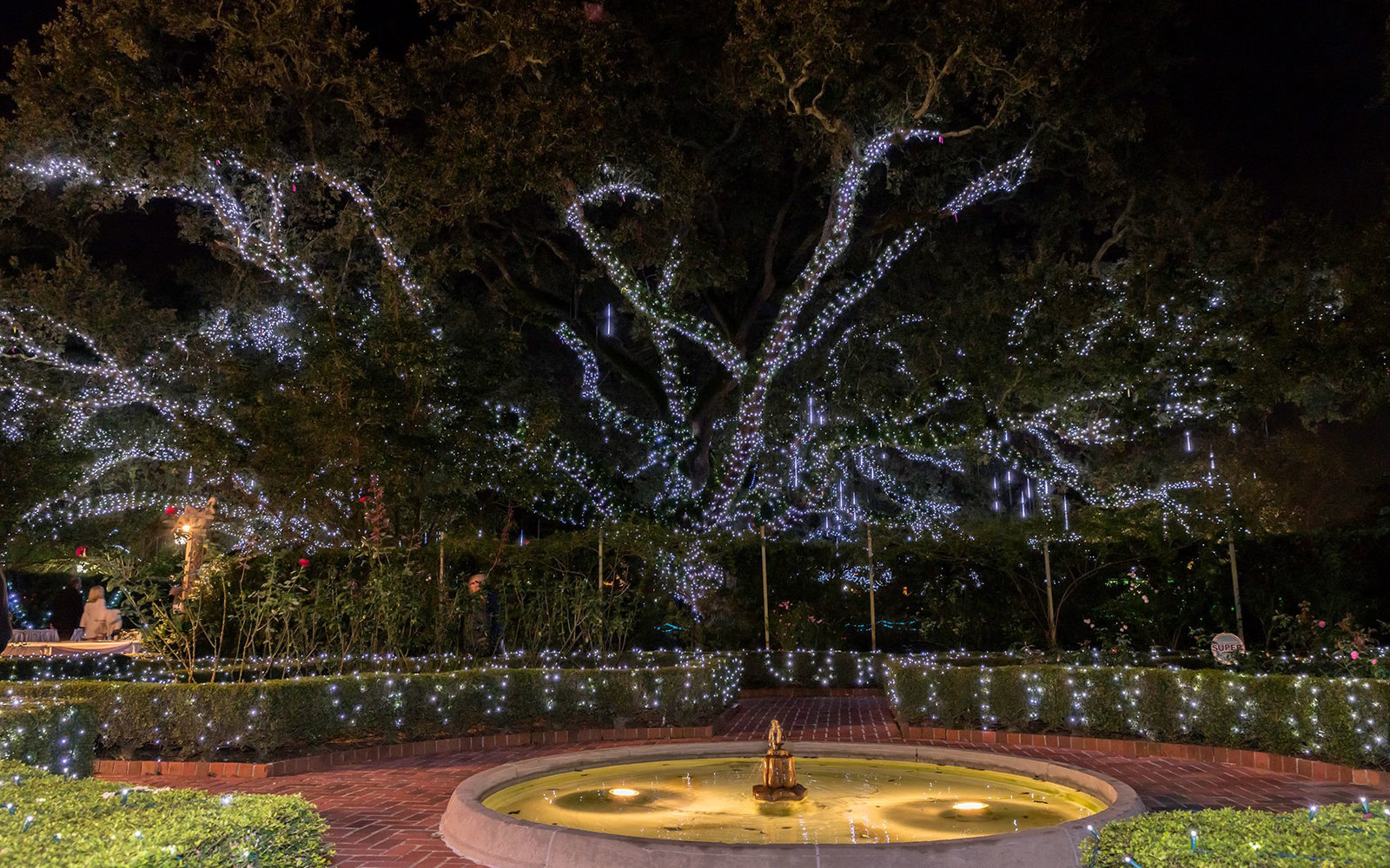 City Park New Orleans Christmas Lights