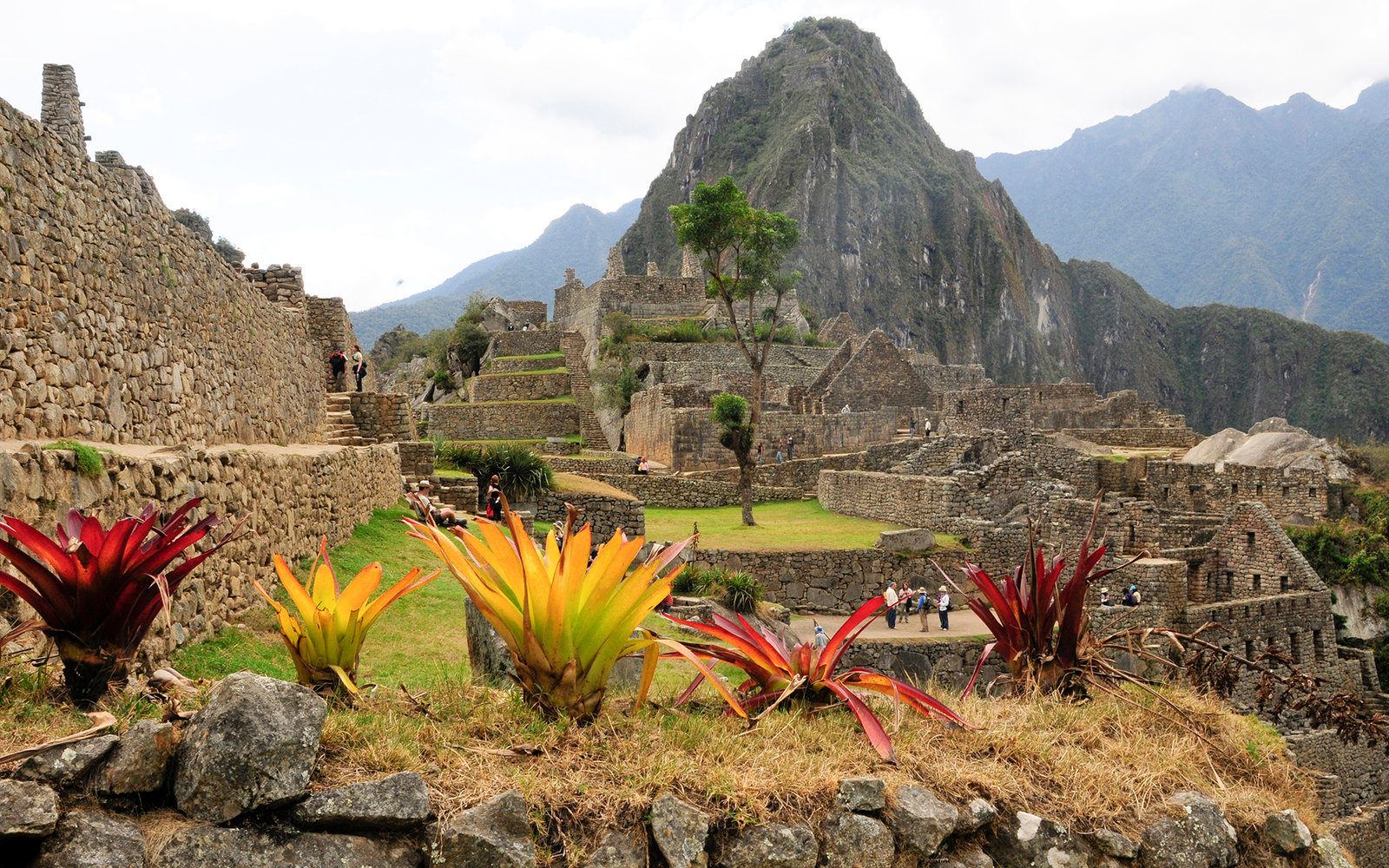 Flowers At Macchu Picchu, Peru. (Photo by Education Images/UIG via Getty Images)