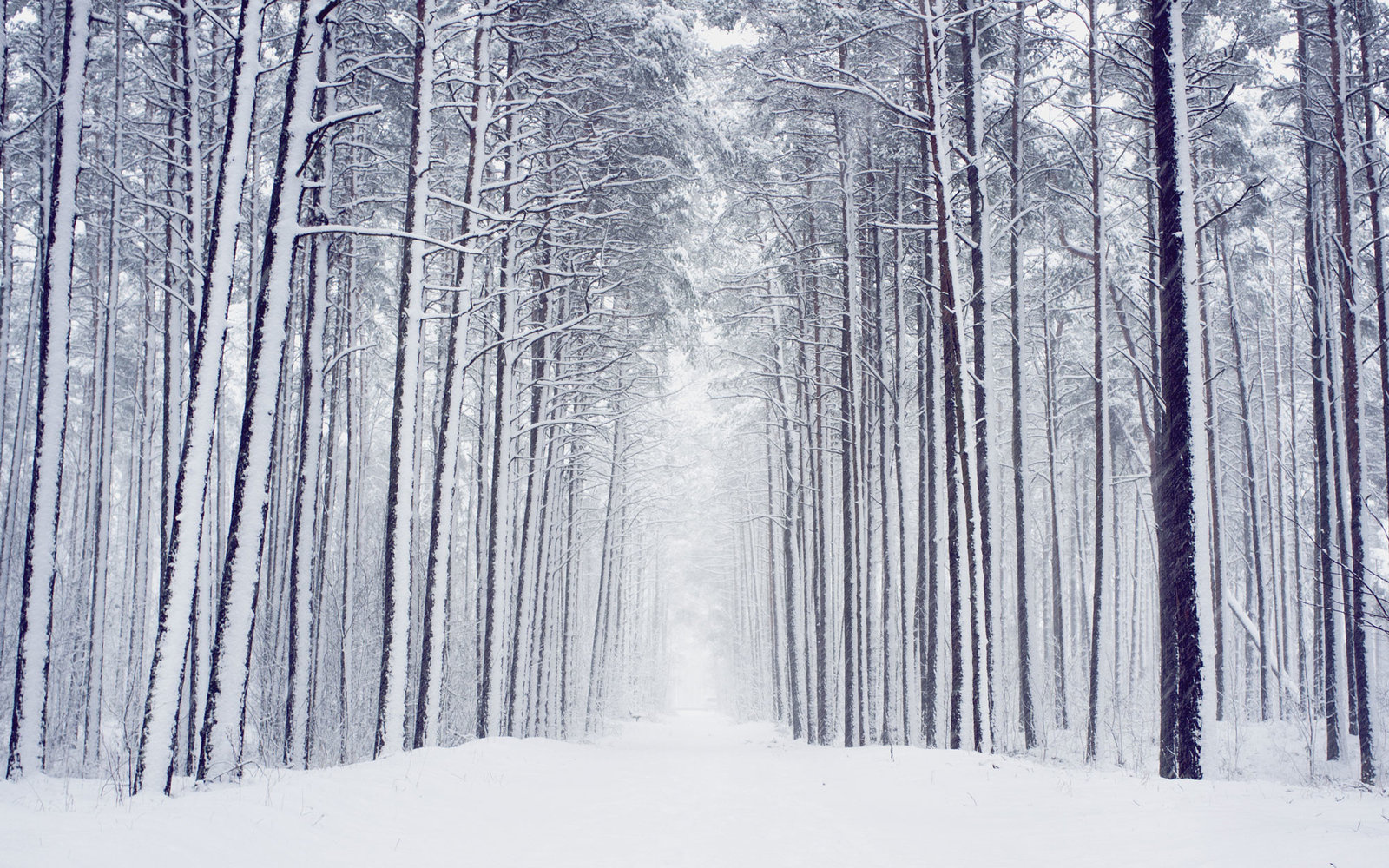 22 Amazing Winter Pictures That Will Have You Wishing For Snow