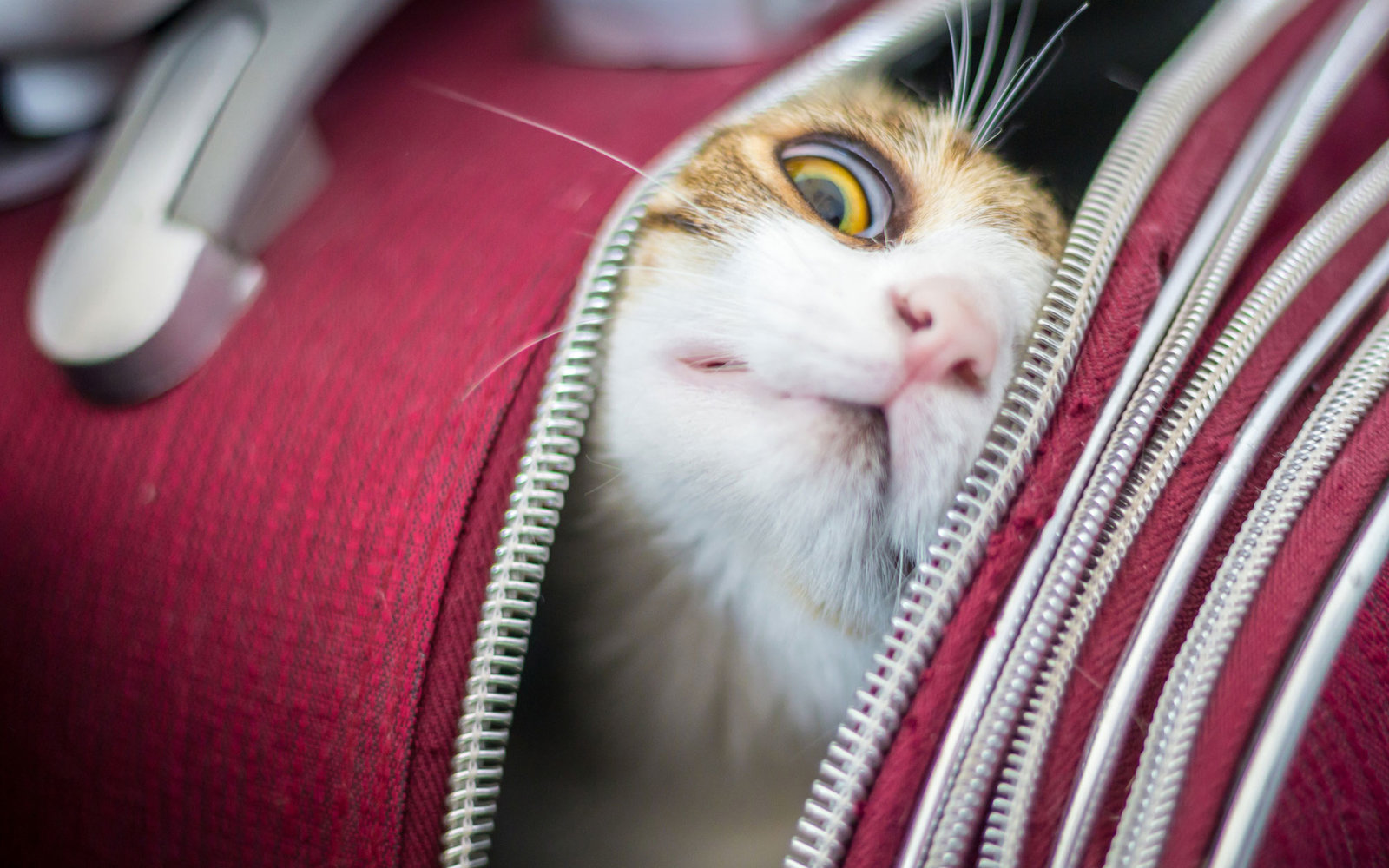 Travel with Cat