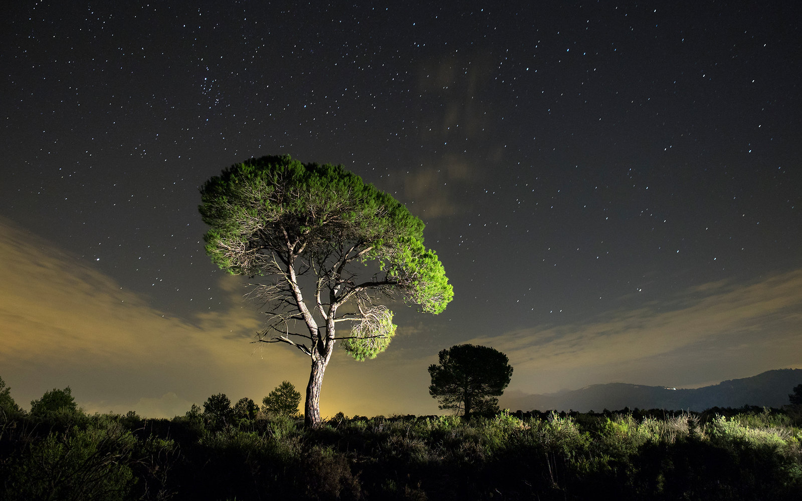 Solitary tree with crepuscular light and stars