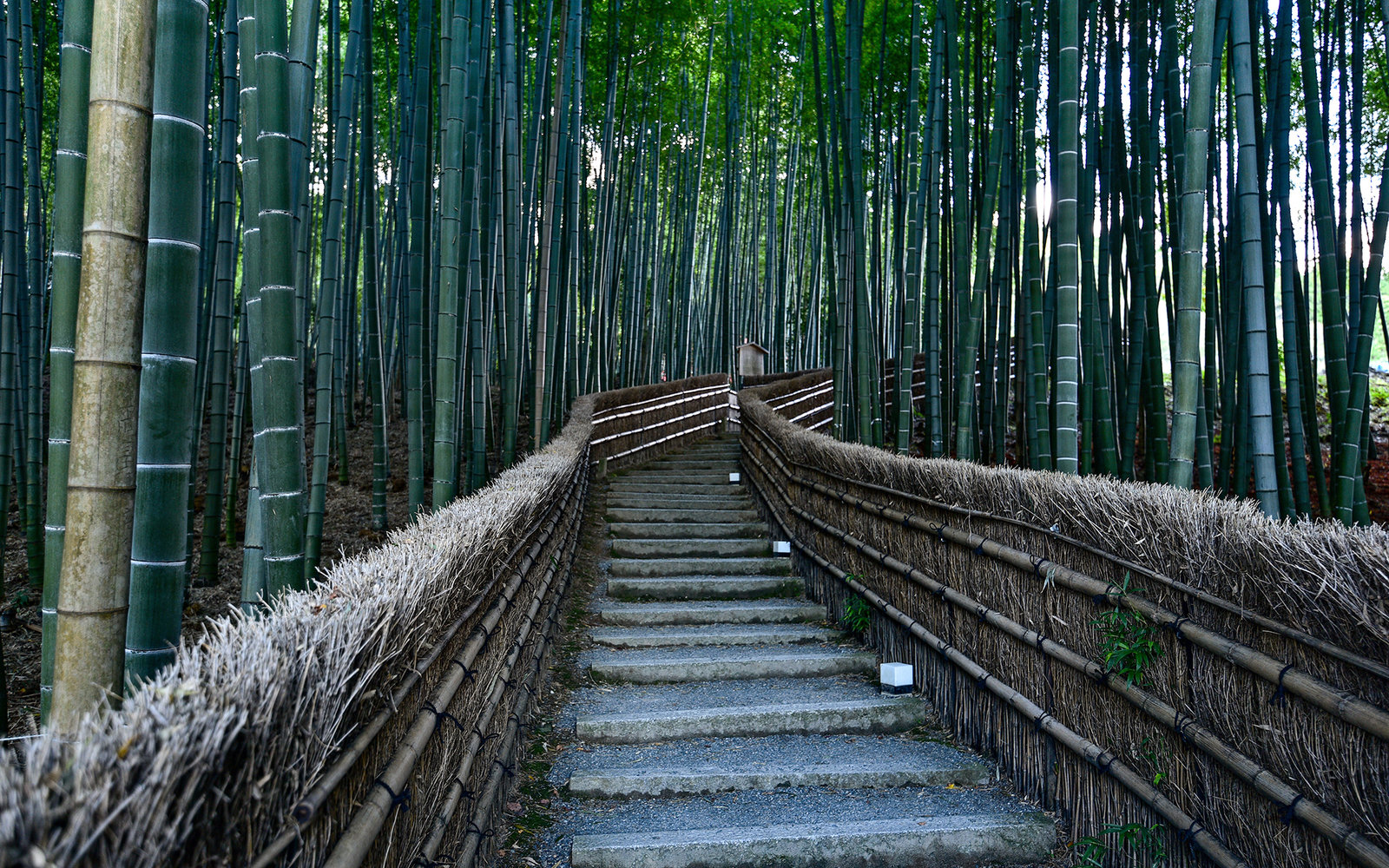 Steps leading through a bamboo woodland at Adashino Nenbutsu-ji temple, Kyoto Japan