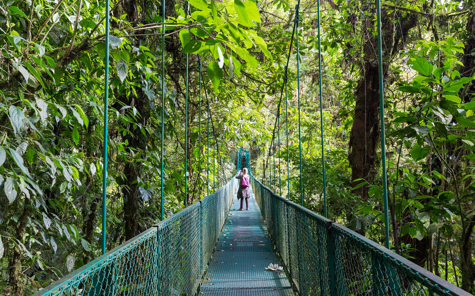 Costa Rica, Puntarenas Province, Santa Elena, canopy tour, suspension bridge