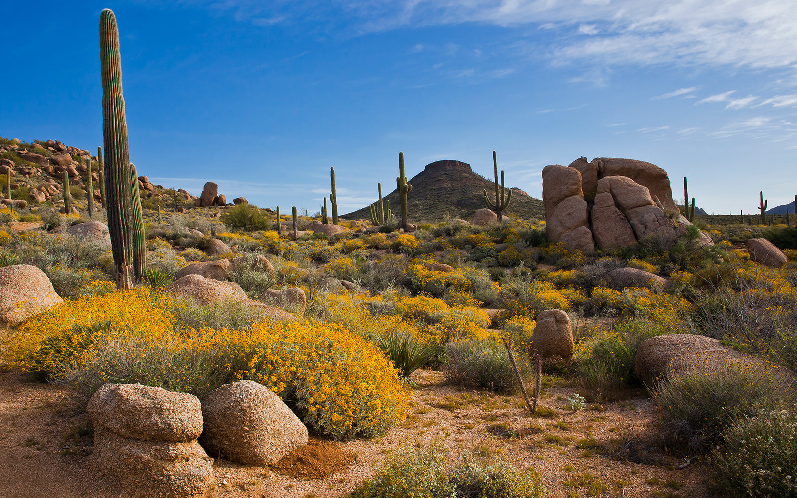 Flowers, saguaros and boulders in the desert