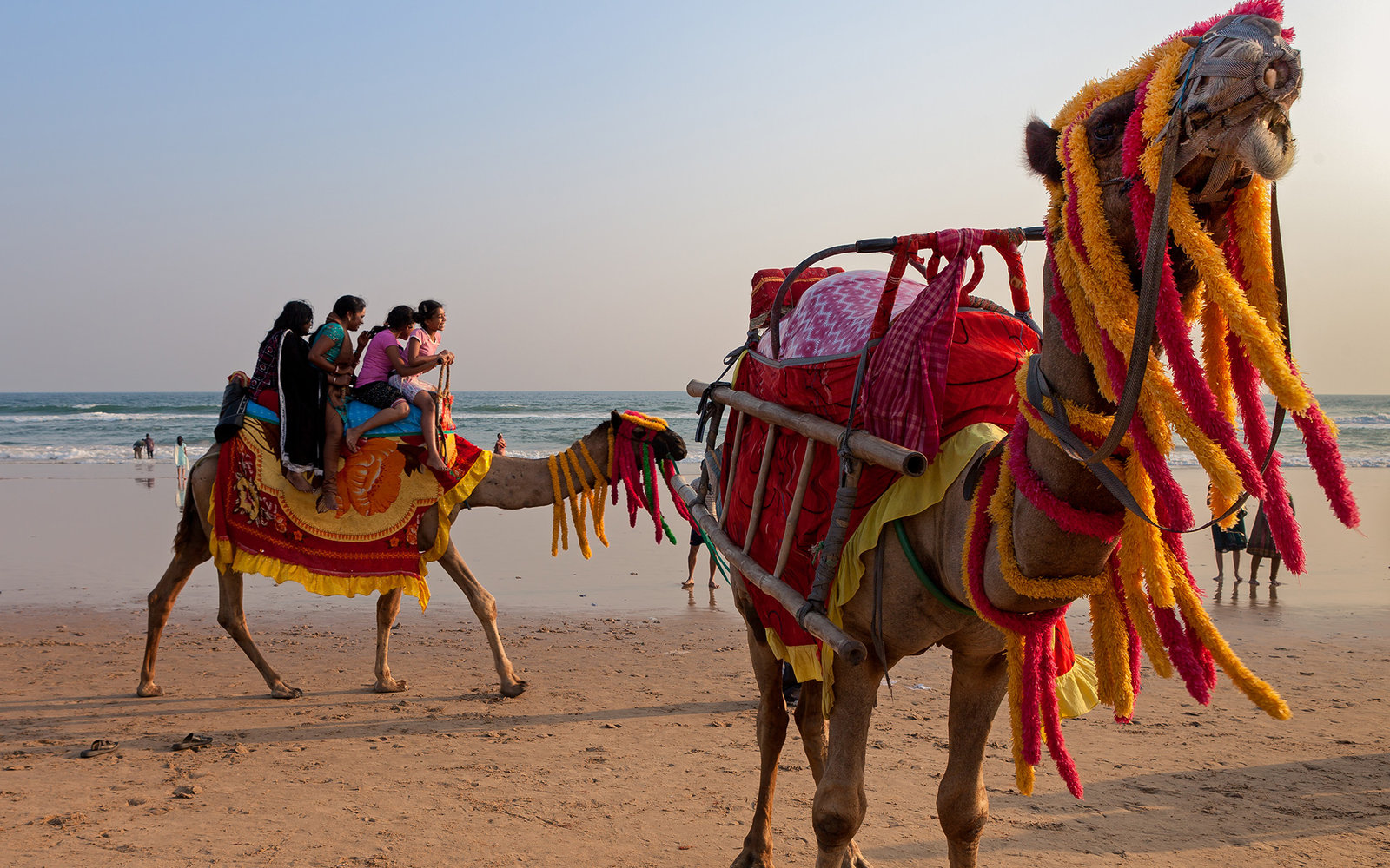 [UNVERIFIED CONTENT] Camels wearing colorful garlands on the beach and Indian tourists riding them during holidays in Puri, Orissa, India.