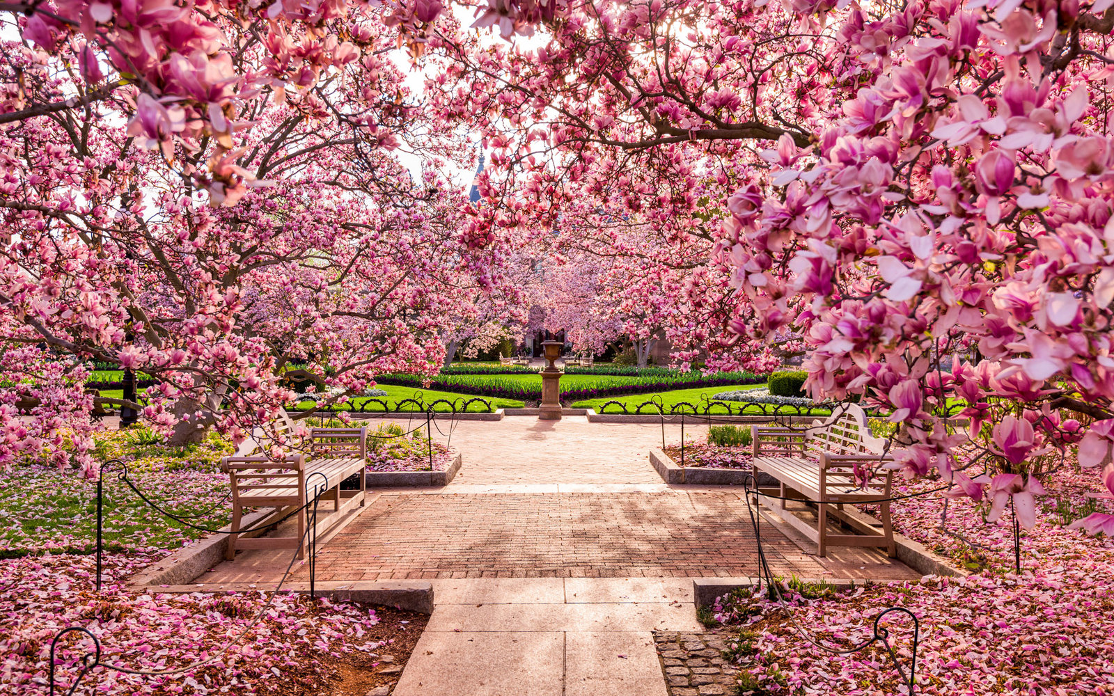 When Do Cherry Blossoms Bloom In Washington D C