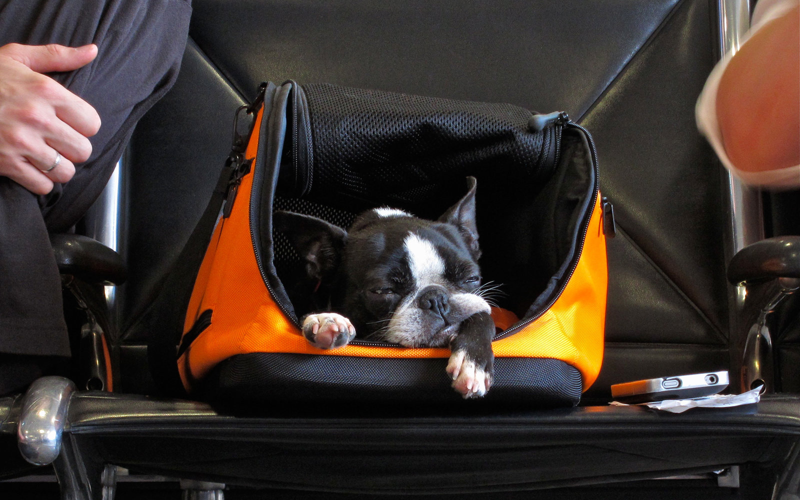 delta s new rules for flying with pets travel leisure ForAir Travel With Dog In Cabin
