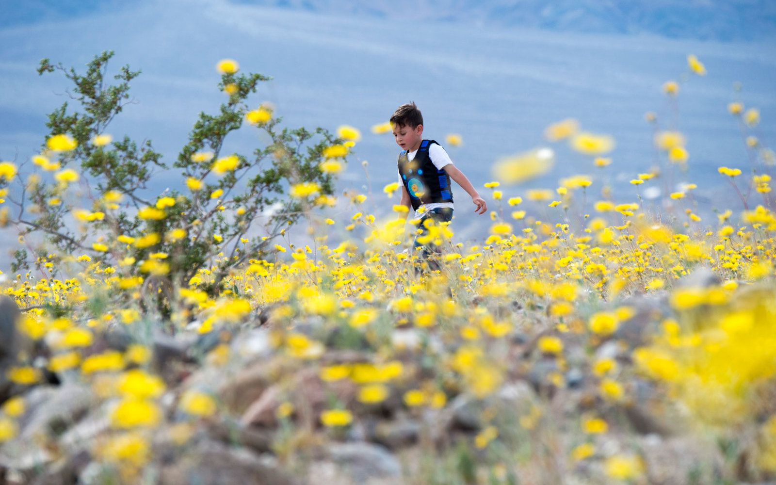 Death Valley California Super Bloom