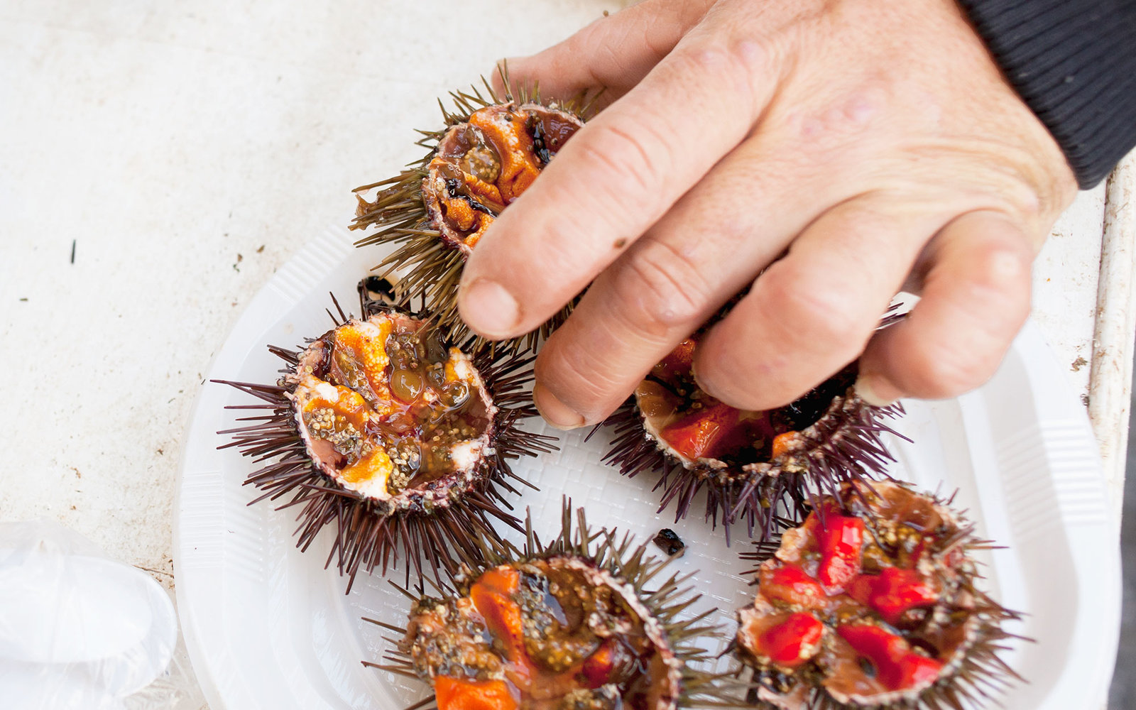 Hand putting sea urchin on plate
