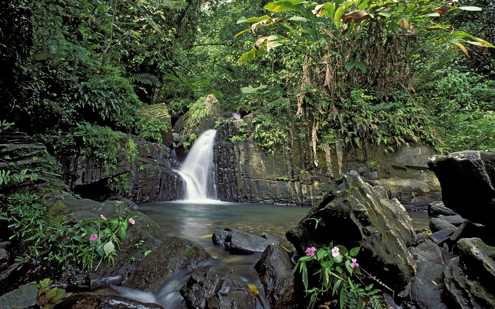 PUERTO RICO - 1994/01/01: Puerto Rico, El Yunque Rain Forest, Waterfall, Impatiens. (Photo by Wolfgang Kaehler/LightRocket via Getty Images)