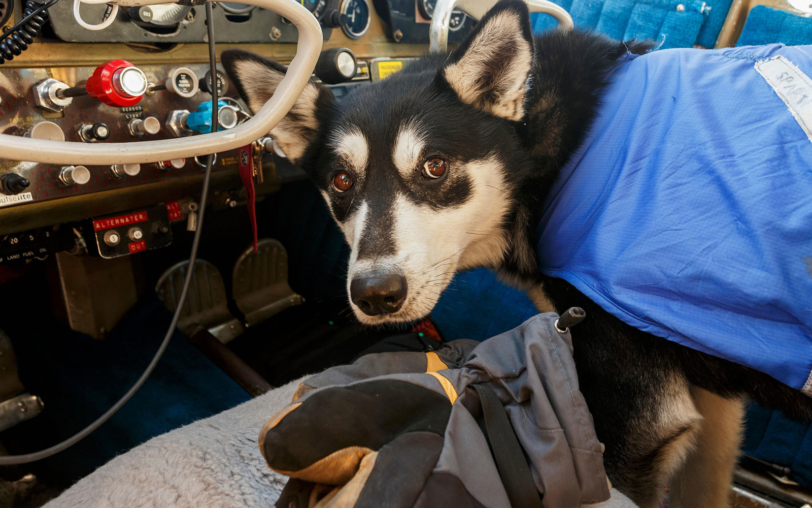 ERKK3W Cockpit,Alaska,Anchorage,Sled Dog,Iditarod