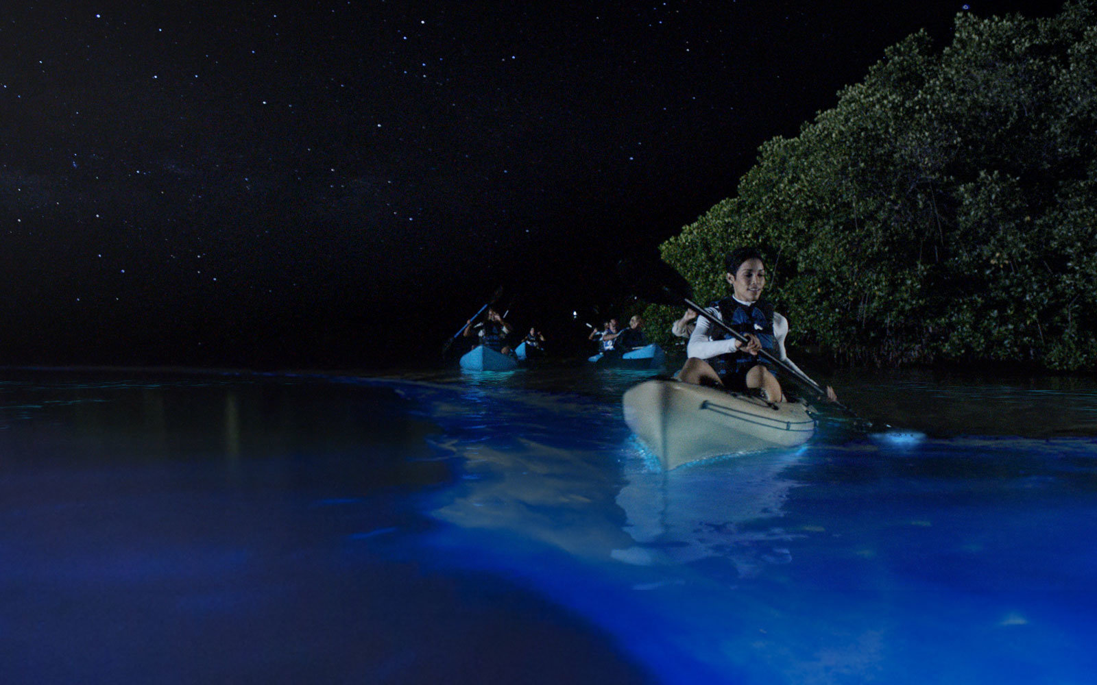 Vieques Bioluminescent Bay