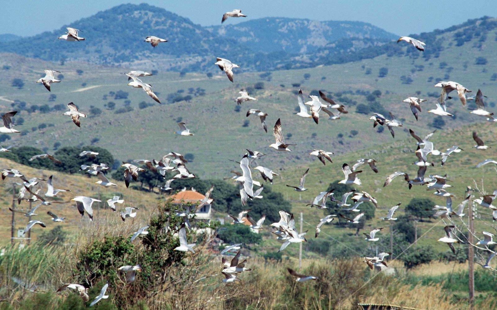 GREECE - JULY 24: Flock of seagulls flying, Lesvos island, Greece. (Photo by DeAgostini/Getty Images)