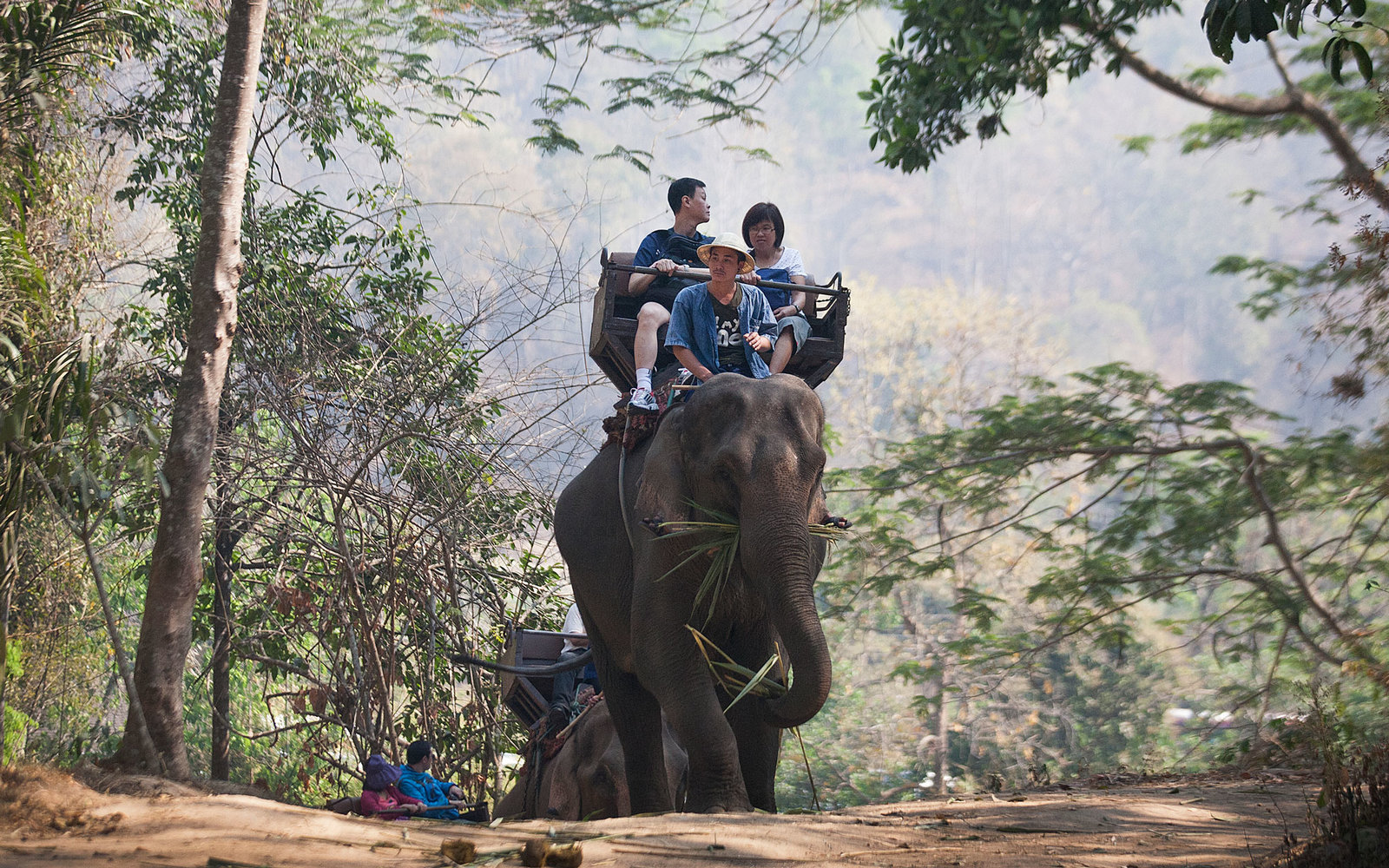 Sixth Tour Company Agrees To Stop Elephant Rides After