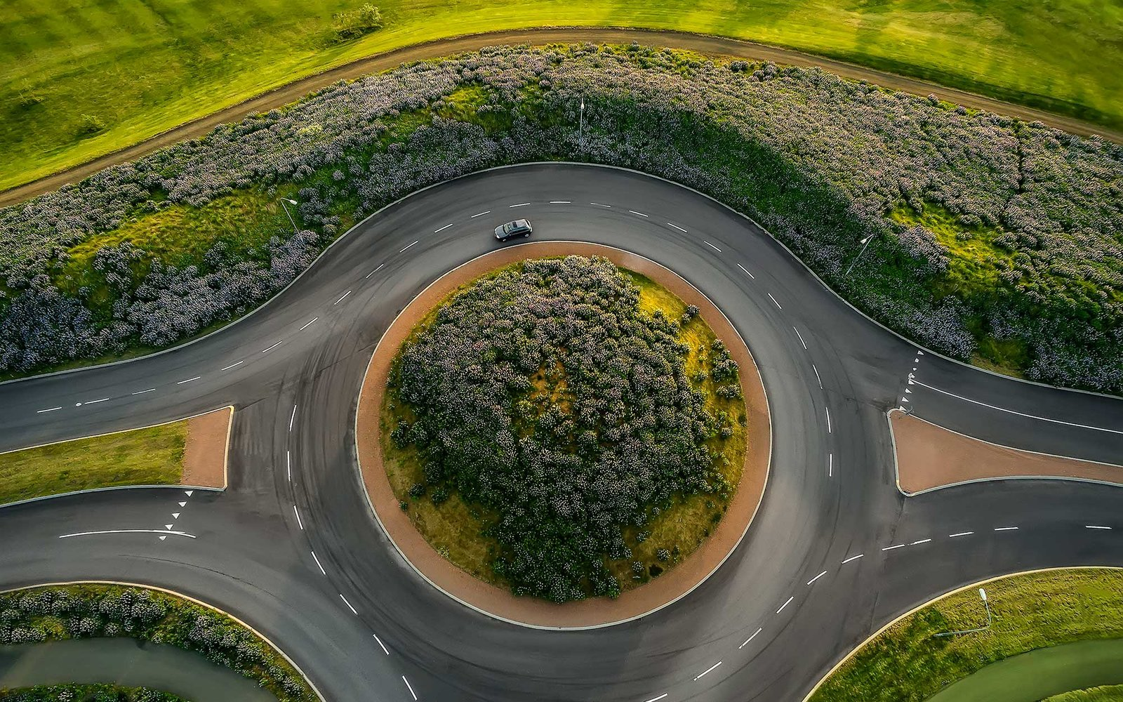Traffic Circle and Lupines
