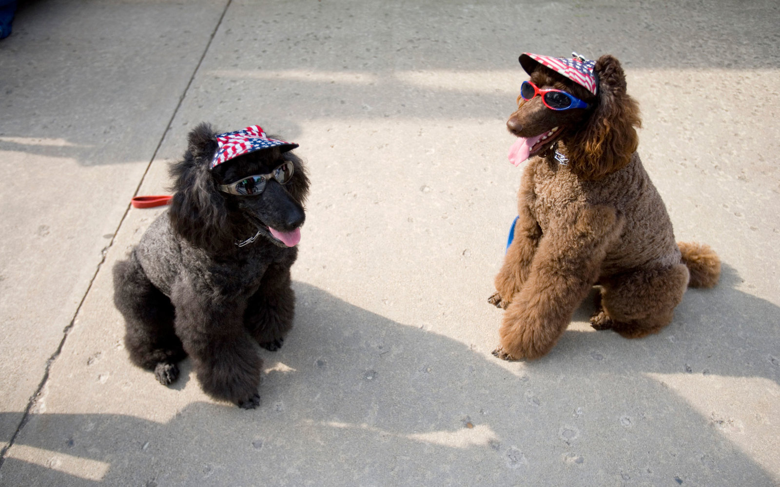 Fourth of July Dog Parade