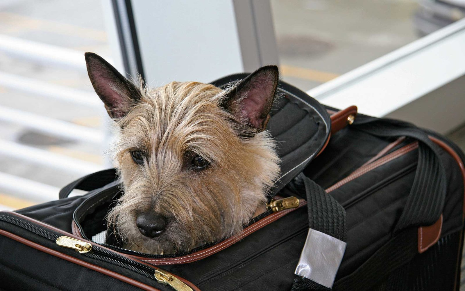 Image result for dog airport