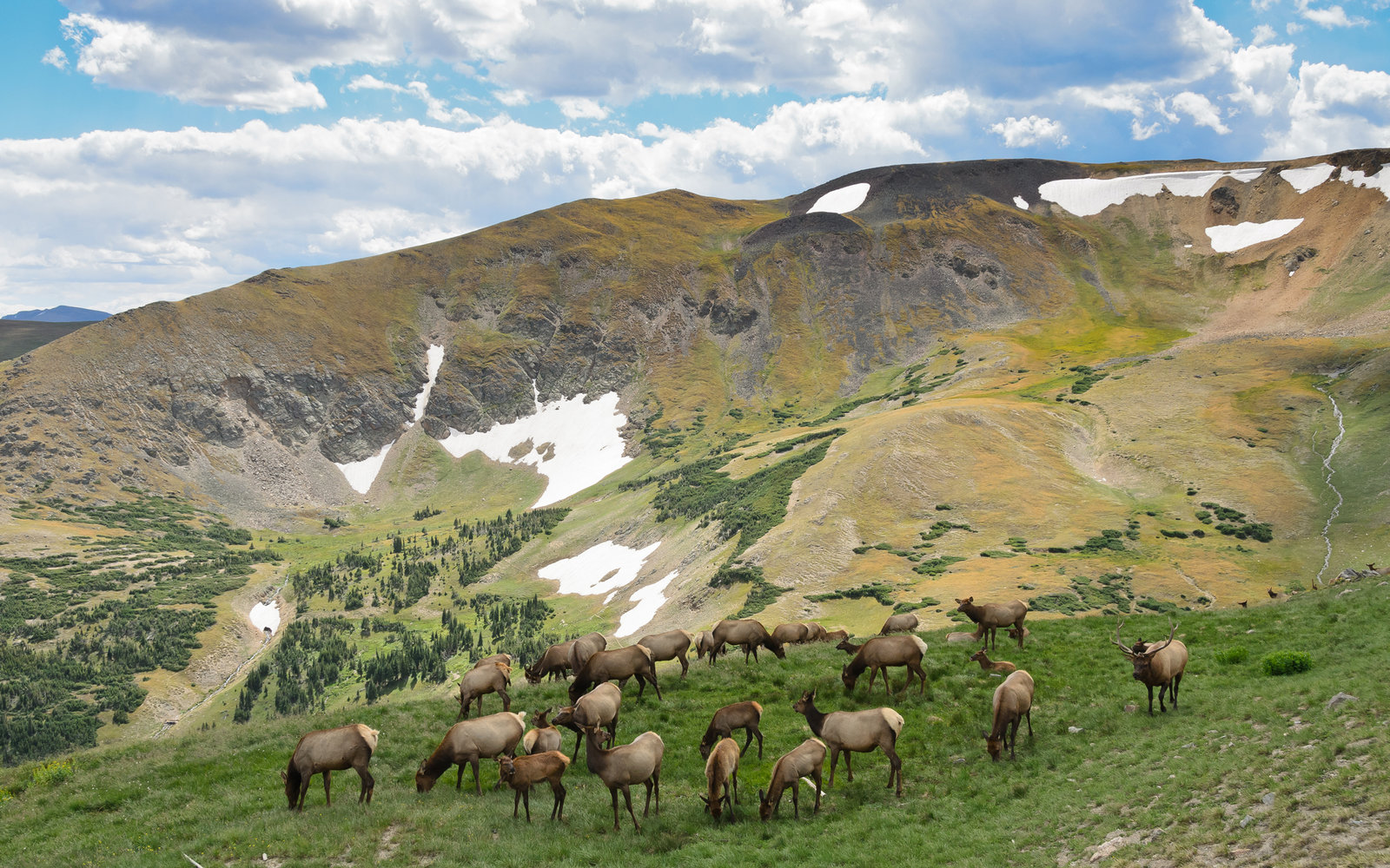 Group of Elk deer in Rocky Mountain National Park