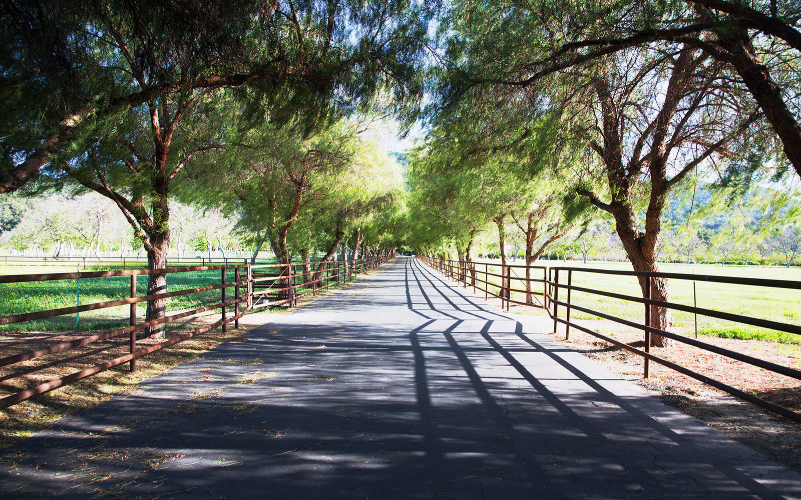 Tree lined road, Upper Ojai