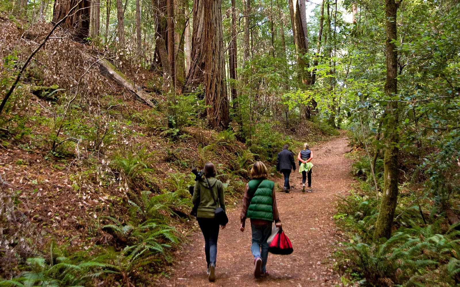 DRDN5R Visitors to redwood tree forest in Mendocino County, California